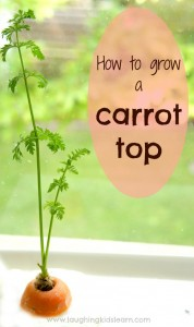 How to grow a carrot top