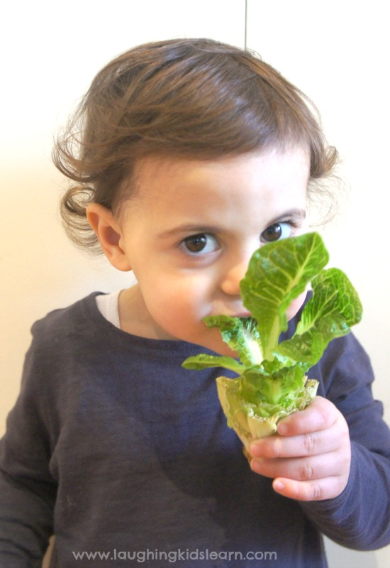Toddler taste testing lettuce grown indoors