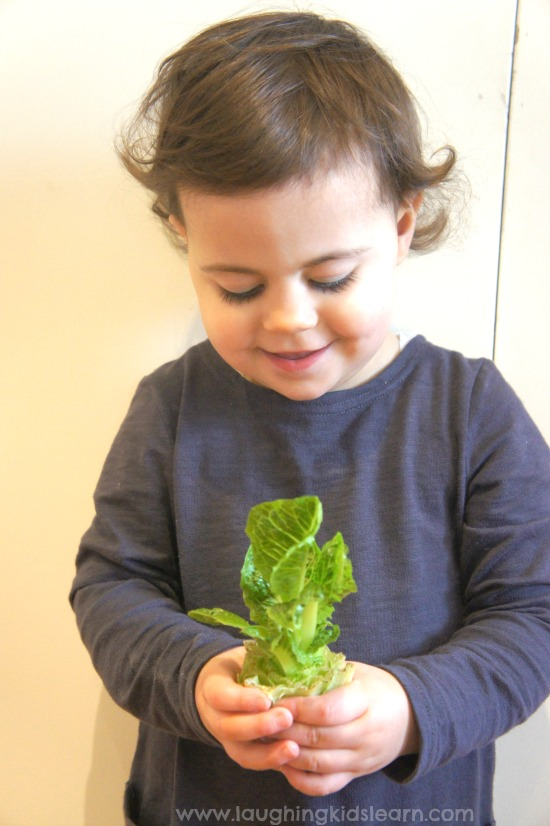 teaching children about growing indoors