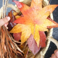 Collecting leaves from nature walk