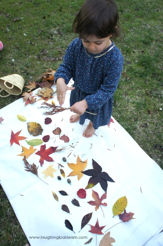Making a collage of leaves