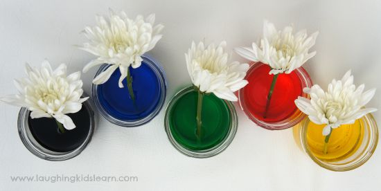 Science activity flower colouring