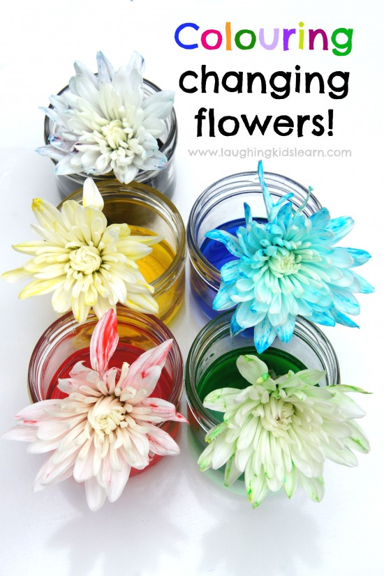 Color changing flowers for science. Great as a Spring time activity for kids.