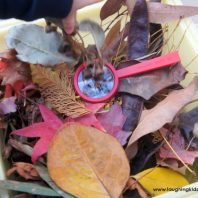 making an Autumn or Fall sensory bin