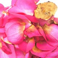 old rose petals for sensory play and use in fairy mud