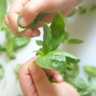 How to make simple basil pesto with kids in the kitchen