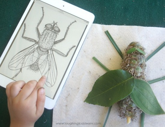 making a fly using nature art